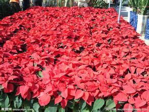 北京花卉种植基地
