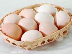 聊城土鸡蛋批发厂家|土鸡蛋批发价格|土鸡蛋批发