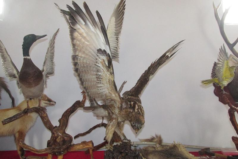 青州市纪元动物标本制作中心