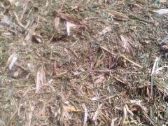 【绿色环保】胶州牛羊青贮草料厂家直销