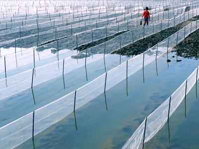 河北海參養殖網生產廠家——質量好的海參養殖網價格