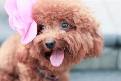 宠物美容报价:卡塔儿宠物服务,首屈一指的烟台宠物美容公司