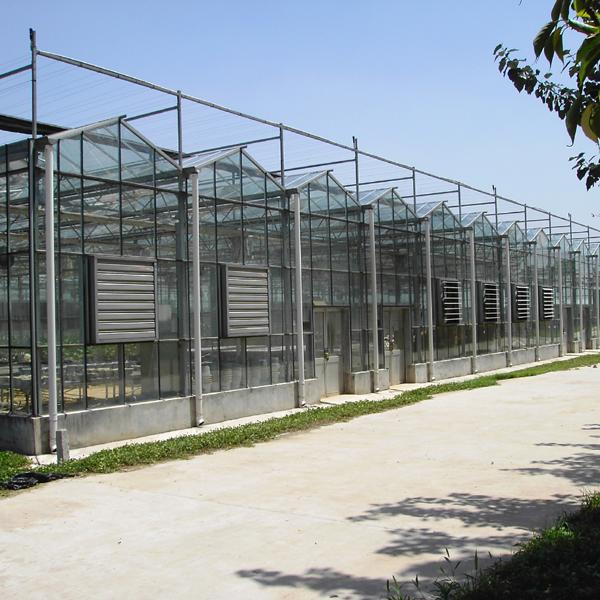 安徽智能连栋温室建设/智能连栋温室建设/河北智能连栋温室建设