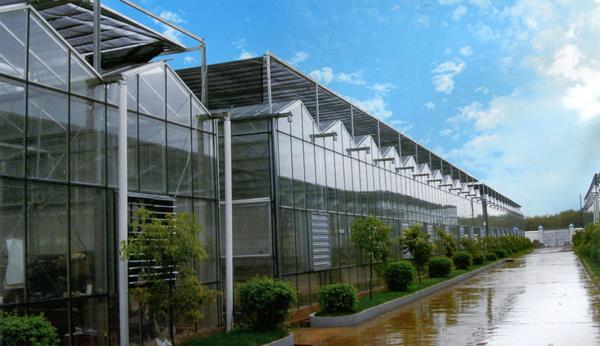 有立柱日光温室承建|山东有立柱日光温室承建|蔬菜日光温室建设