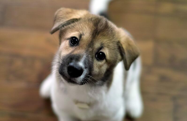 【专业】烟台宠物美容师培训 烟台宠物美容学校  烟台卡塔儿
