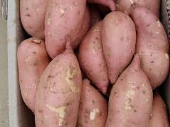 《惊爆价》江苏西农431红薯价格